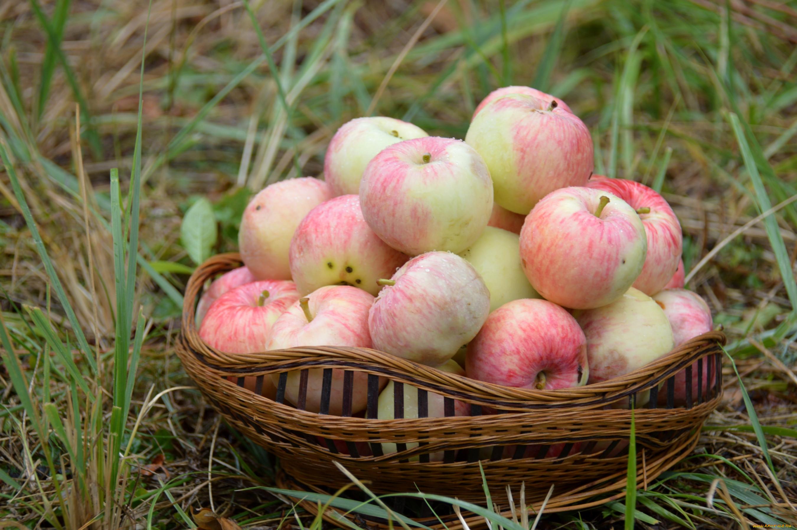 Картинки яблоко розовое